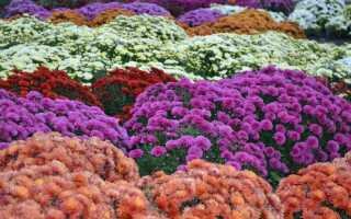 Как правильно выбрать цветы на могиле, сделать их постоянными и красивыми