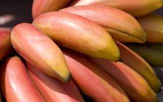 Красные бананы: как их купить, что с ними делать и в чем преимущества