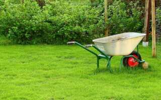 Как предотвратить болезни растений в саду и на балконе