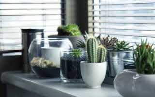 Как подготовить горшечные растения к отопительному сезону в домашних условиях