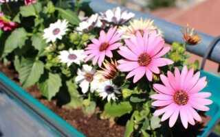 Балконные цветы весной — что выбрать, как составить и посадить