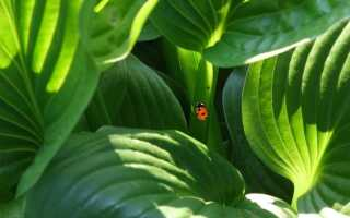 Фиторемедиация — растения, очищающие воздух и почву