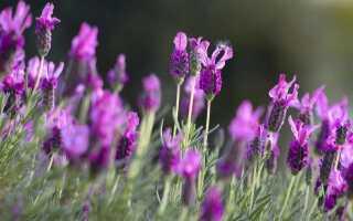 Французский сад — 25 аранжировок