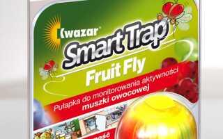 Ловушка для фруктовых мух