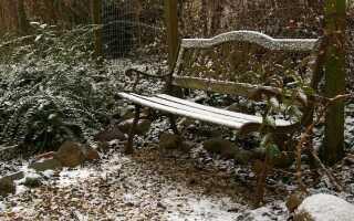 Как ухаживать за садом в теплую зиму