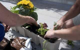 Сад на балконе — фрукты и овощи