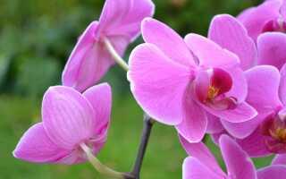 Горшечные растения — самые распространенные ошибки при уходе