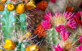Как выращивать кактусы?
