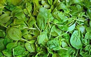 Шпинат — свойства, разновидности и выращивание