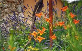 Цветущая скидка от многолетних растений, которые вам не нужно поливать. Проверьте, что посадить