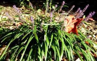 Осень в саду — последняя работа перед зимой