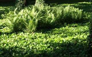 Путь в вечнозеленый сад — вечнозеленые растения