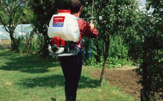 Опрыскивание фруктовых деревьев и кустарников: впервые в сезоне