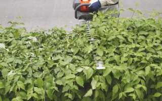 Как подрезать живую изгородь осенью