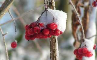 Зимний сад, полный цветов — декоративные кусты в течение всего года