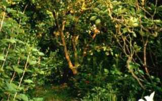 Экологический сад — пермакультура —