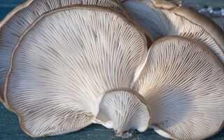 Выращивание грибов в домашних условиях — как это сделать?