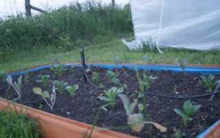 Повышенные кровати в Greengrocer's. Выращивание растений в ящиках
