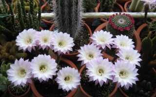 CAM растения обладают уникальным способом фотосинтеза. Как вырастить их