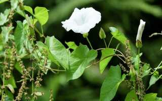 Как избавиться от сорняков — домашние средства как гербициды