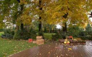 Способ освоения большого участка земли с деревьями (ВИДЕО)