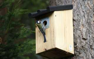 Скворечник для птиц. Как его построить и где его повесить