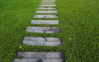 Как правильно настроить газон — пошаговый совет