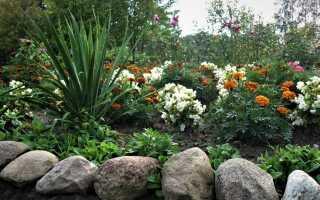 Почему растения не цветут и не плодоносят? Ошибки в выращивании