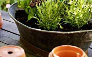 Садоводство с керамзитом — Э-огроды