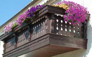 Уход, удобрение и полив балконных растений