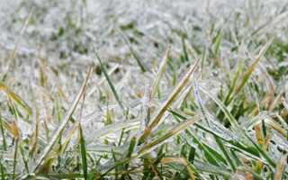 Болезни газонов — осень и зима