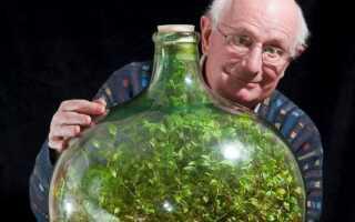 Сад в бутылке — более 40 лет без полива