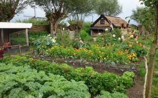 Какие растения следует сажать вместе и каких соединений следует избегать?