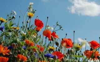 Луговые цветы на скидки. Какие цветы нужно сажать в саду [ФОТО]