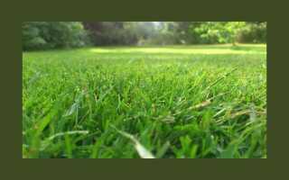 Какая трава в сад. Популярные смеси и виды трав