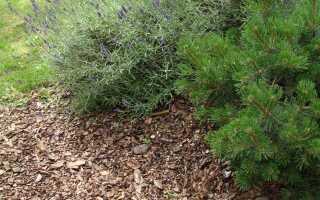 Не только садовая кора — виды и применение подстилки