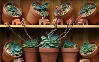 Размножение горшечных растений. Как приготовить рассаду из популярных растений
