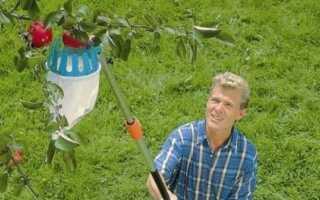 Сбор урожая фруктов — практическая соковыжималка для фруктов