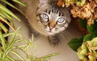 Ядовитые цветы для кошек и безопасные для них