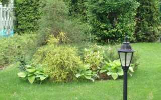 Стебель после рубки дерева в саду: что с ним делать