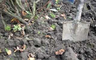 Тестирование реакции почвы на участке — как и почему это стоит делать
