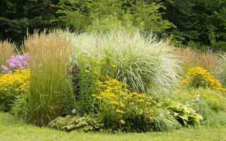 Что сажать в саду: растения устойчивы к морозу и теплолюбивы