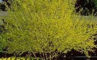 Обрезка деревьев и кустарников —