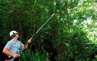 Обрезка деревьев и озеленение —