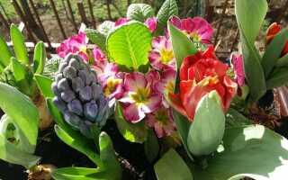 Балконные цветы, которые нужно сажать весной [ФОТО]