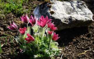 Растения охраняются в саду и дикорастущих. За чем следить