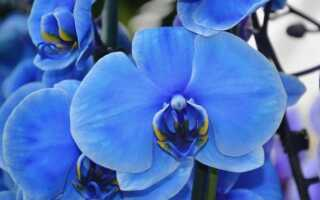 Орхидеи ненавидят садовую почву