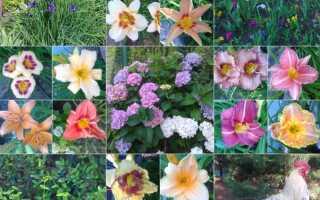 Цветы в саду — Joli garden
