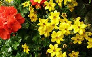 Горшечные растения на скидки. Как их сажать и почему оно того стоит