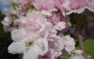 Когда начинается весна и какая у нас весна